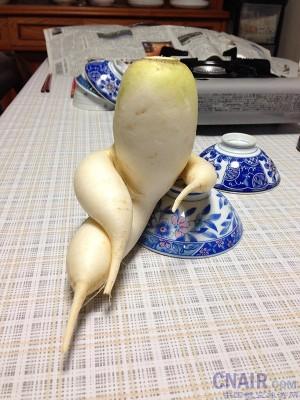 身为一个蔬菜,就该有蔬菜应有的样子!