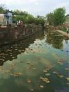 水塘清澈见底