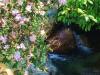 杜鹃花开流水急