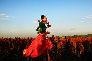 云南罗平红高粱红成中国新风景游客新亮点