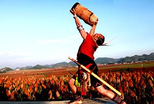 罗平高粱酒竖起中国小曲清香型白酒一面帜
